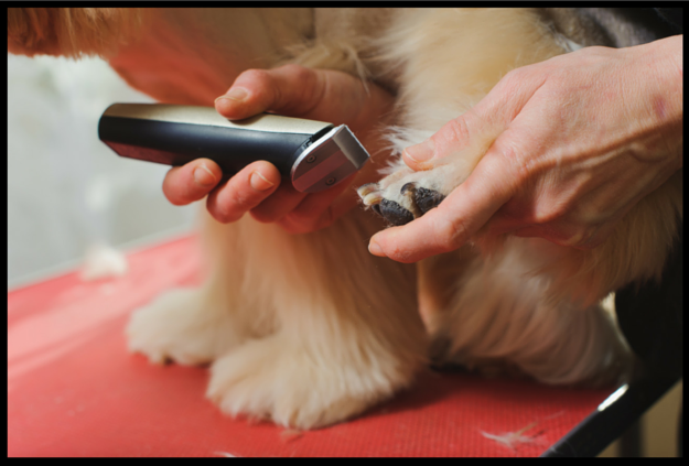 Dog grooming kit equipment tips diy dog grooming when it comes to dog grooming getting the right equipment is of paramount importance first things first youll want to get quiet dog clippers to help solutioingenieria Image collections