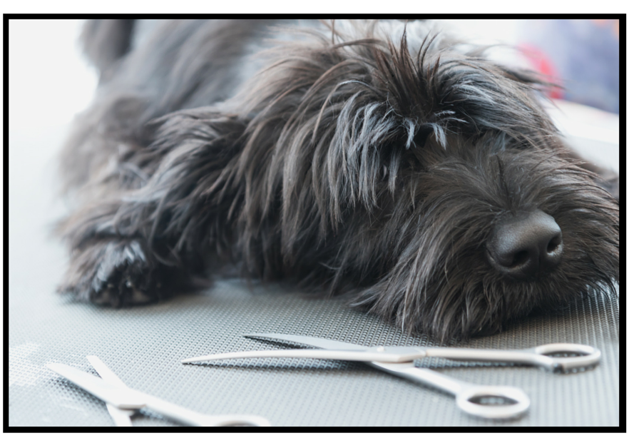Dog grooming kit equipment tips diy dog grooming its not complicated and youll be able to hone your dog grooming skills just by reading a few pages on the site and by understanding how to purchase the solutioingenieria Image collections