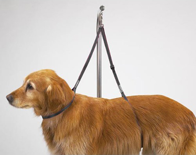 Dog grooming harness the best reviewed diy dog grooming even if you dont have a dog grooming table some reviewers on amazon have said that they simply hung the harness from the top draws in a cabinet in their solutioingenieria Image collections